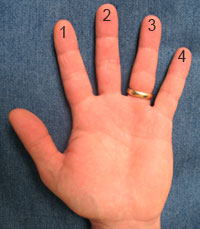image showing the palm side of a left hand with the fingers numbered from one to four from the index finger to the little finger respectively
